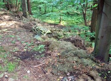 Zahradní odpad vyhazovaný do údolí Bystrého potoka v Beskydech (Autor fotografie: Veronika Kalníková)