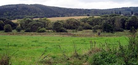 Obr. 2. Niva Bojovského potoka, ve které jsou z dálky vidět žlutě kvetoucí zlatobýly kanadské (Autor fotografie: Zita Červenková).
